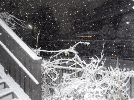 雪_100201
