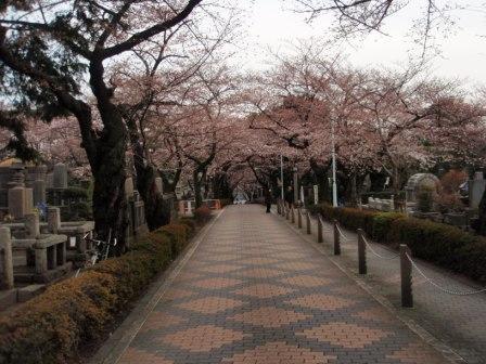青山霊園_100327