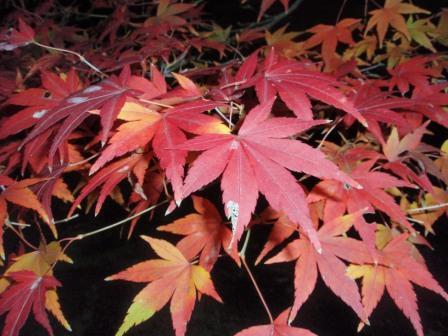 東京都庭園美術館_101128_2