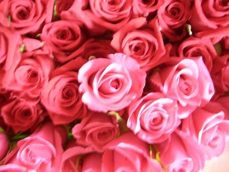 薔薇_1~1