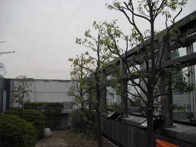 240413-4.jpg