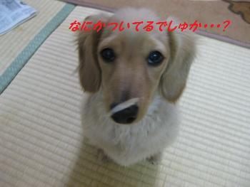 buddy96b.jpg