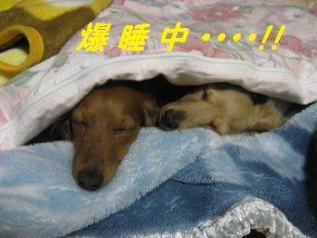 oyako30.jpg
