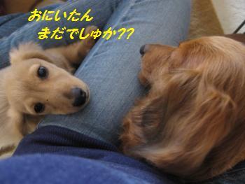 oyako31.jpg