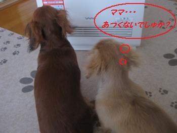 oyako34.jpg
