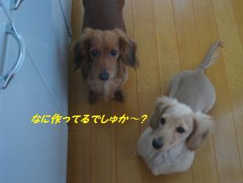 oyako35.jpg