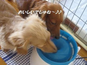 oyako41.jpg