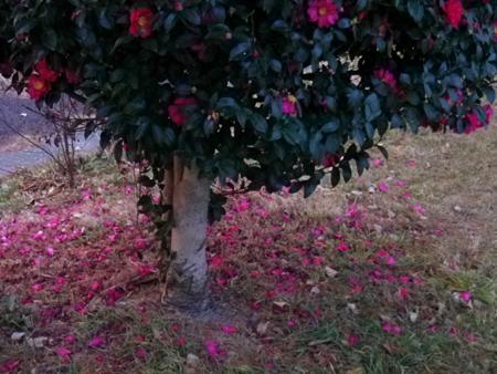 IMGP6776_20120113091443.jpg