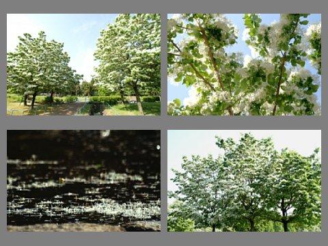 album00002_20110515140935.jpg