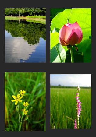 album00002_20110705094648.jpg