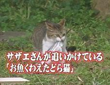 お魚くわえたドラ猫