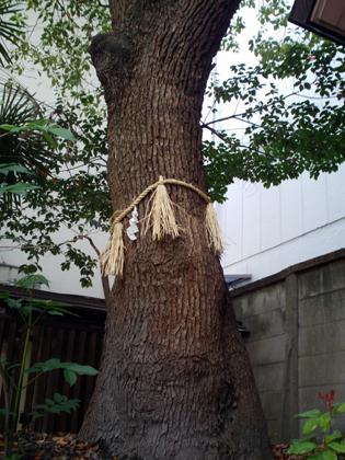 朝日神社木