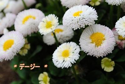 DSC_3025.jpg
