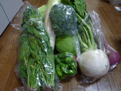 2014.11.19野菜-3