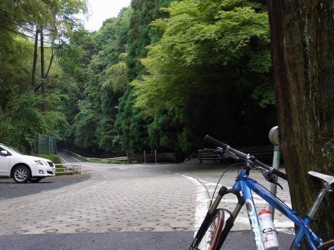 20110619紫陽花の寺ポタ1429