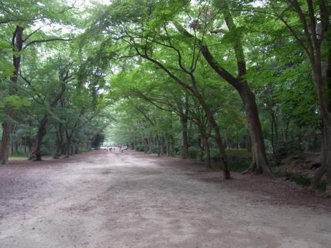 20110703下鴨神社糺の森1463