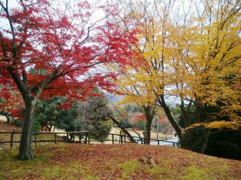 20091129奈良公園1099