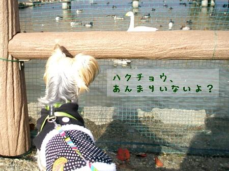 まりおin瓢湖