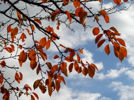 秋ですな。