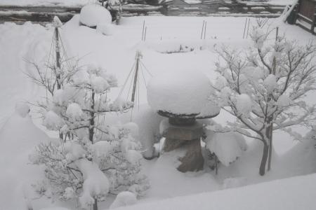 雪、積もりました…