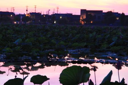 8/8瓢湖