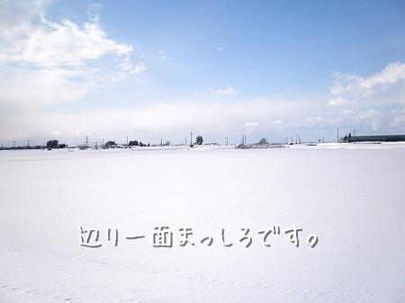 あたり一面真っ白です。