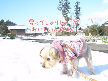 もこ「雪ってしゃりしゃりでおいしいんだよ」