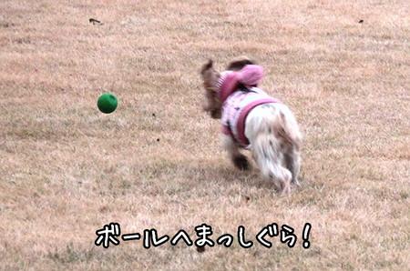 もこ、ボールへまっしぐら。