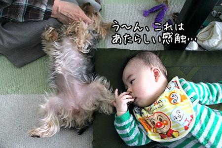 ココアちゃん&ほじゃ2
