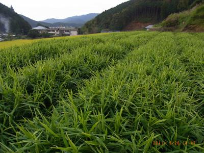 kubokawa1.jpg