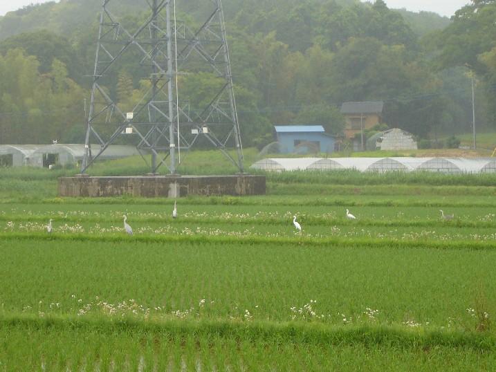 田んぼ風景 002