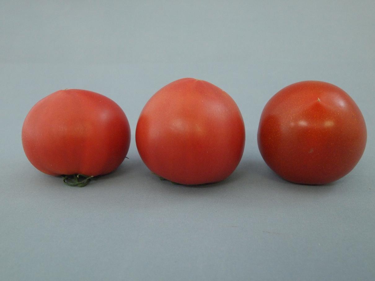 フルーツトマト(並び)