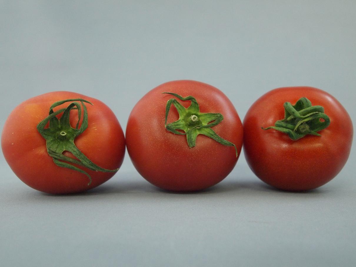 フルーツトマト(並びヘタ)