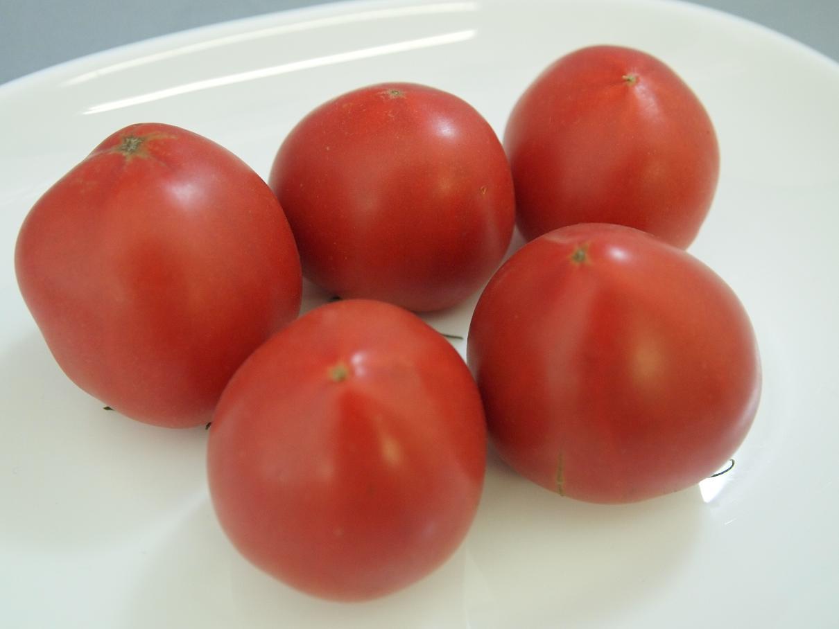 キストマト
