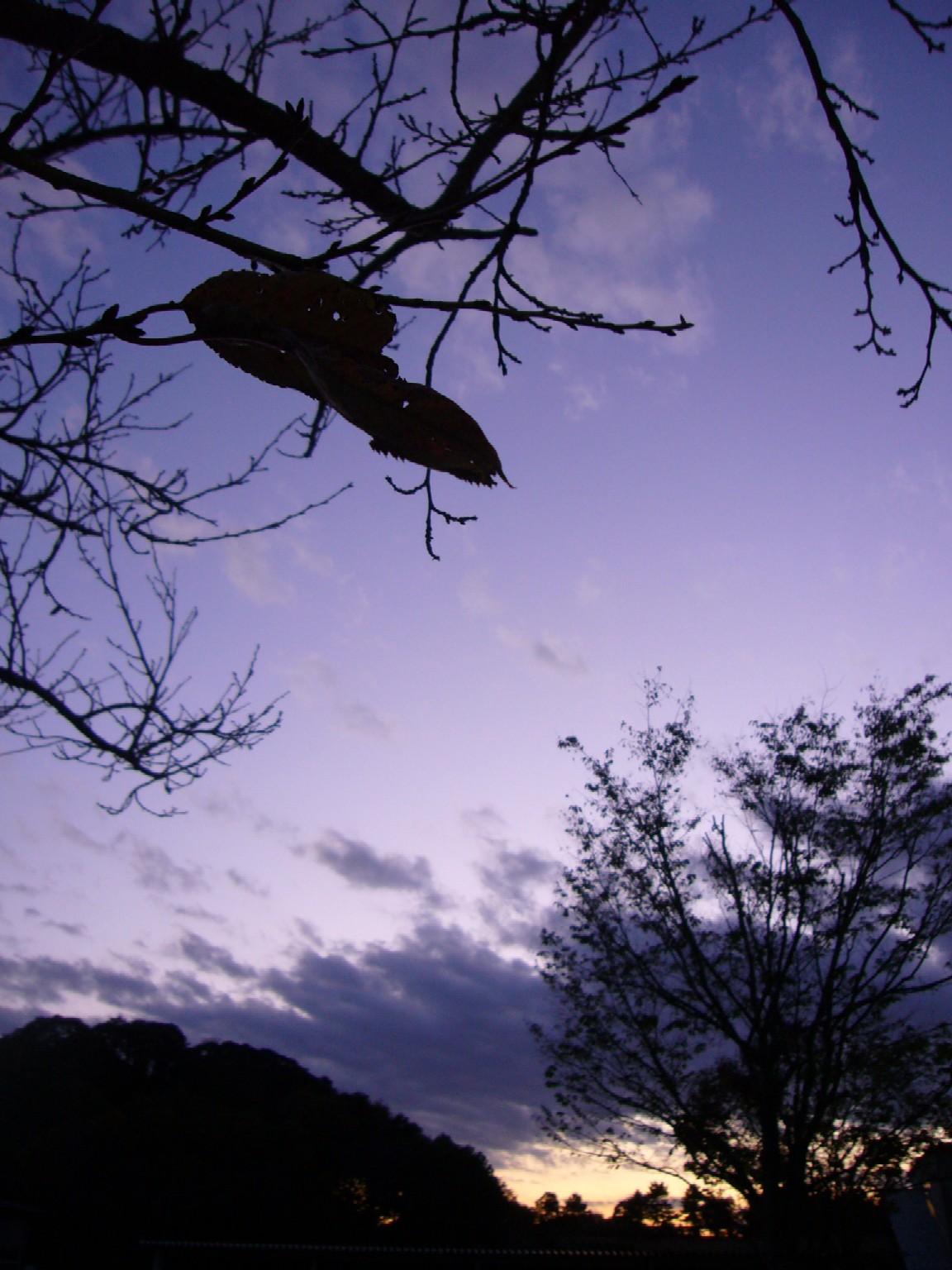 夕日20111124 (2)