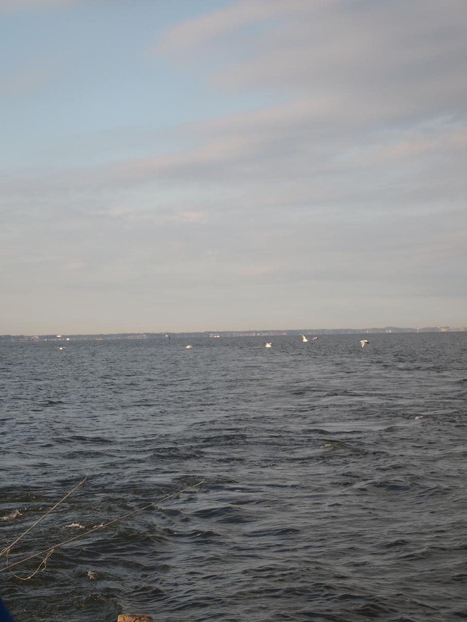ワカサギ漁業 116