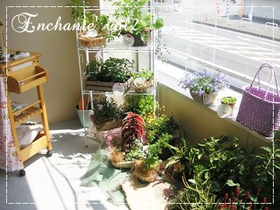 Enchante4