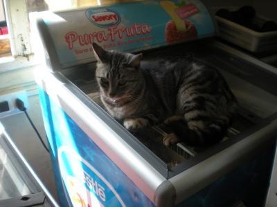 アイスが買えない猫