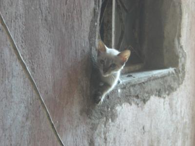 貧民街のネコ