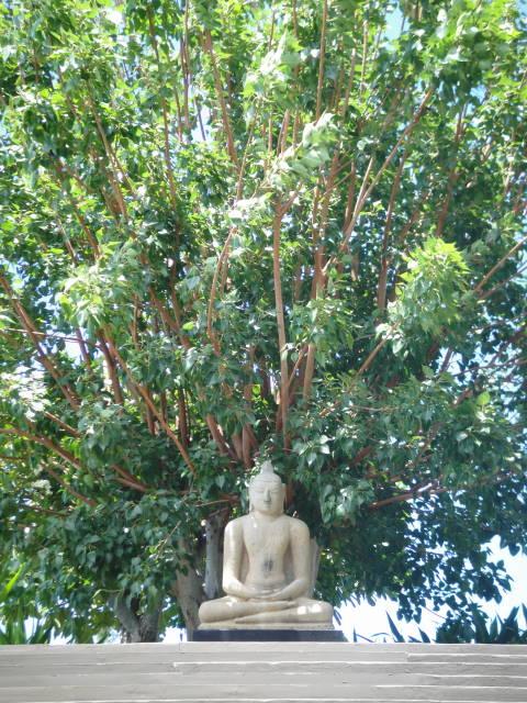 7th Century granite figure of the Buddha meditating beneath a bodhi tree
