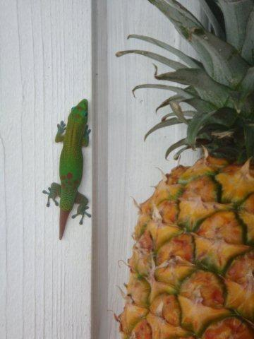 Pineapple and Gold Dust Day Gecko