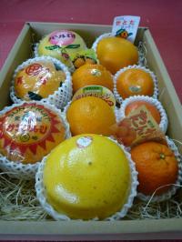 オレンジギフトGセット
