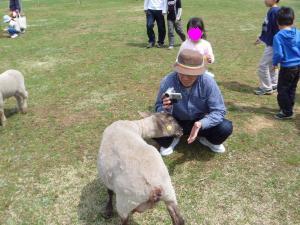 羊に餌を・・・