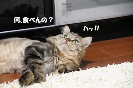 何、食べんの?