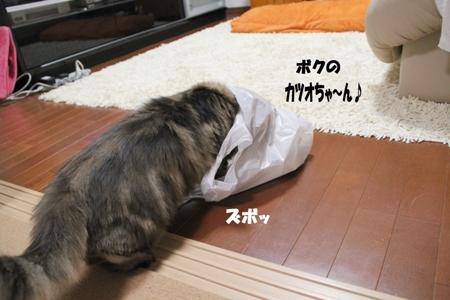 カツオちゃ~ん
