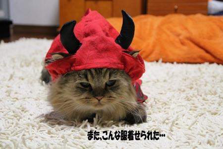 ボクはかわいそうなネコや・・・