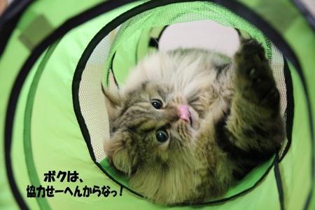 知らんぷりぃ~