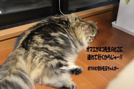 ブツブツブツ(。-`ω´-)