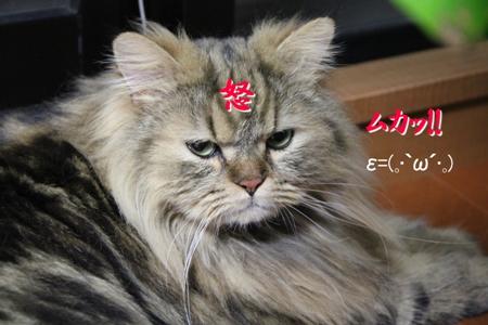 怒(--)怒