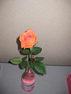 orangeroseinlivingroom20140921.jpg